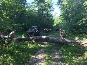 Frank & Bob cutting down tree 7-31-15